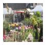 degustation_terroir_jardinsenfetes_blonville